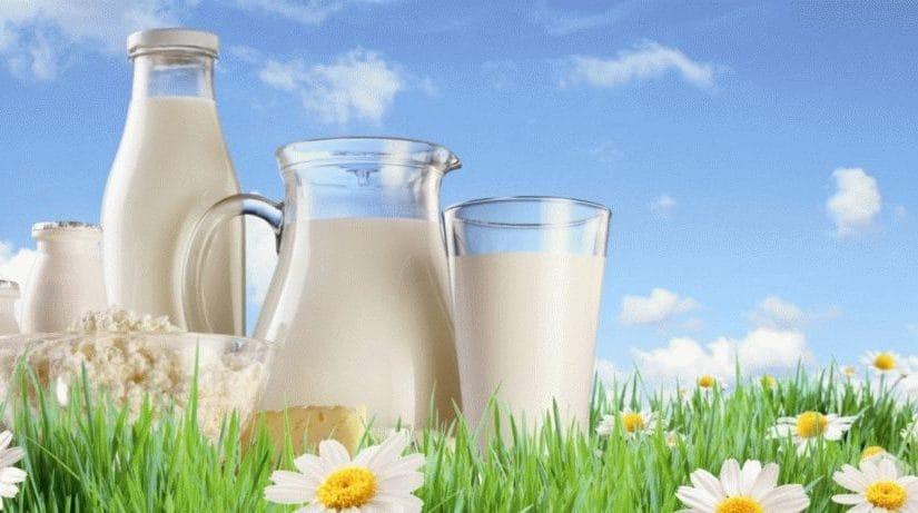 Молоко и молочная продукция