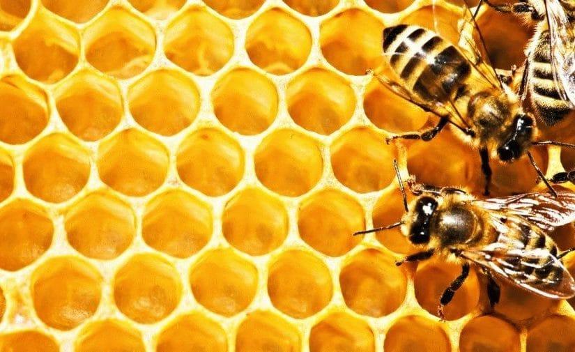 Реклама фито-товаров и продуктов пчеловодства