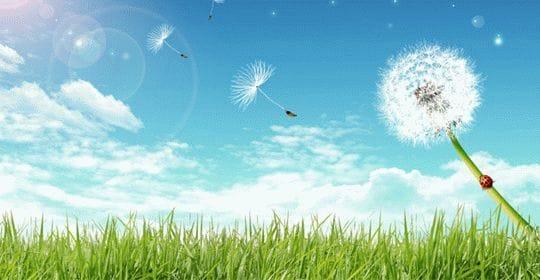 Реклама устройств очистки воздуха и создания оптимального климата